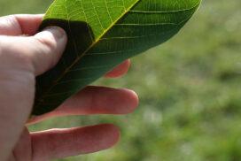 grünes Blatt in der Hand - von Andreas Jahnke fotografiert