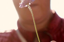 Blume im Gegenlicht - Andreas Jahnke